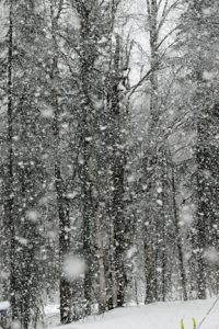 MARCH SNOW— For a short time, on Sunday, March 28, it snowed thick flakes and blanketed the area with a thin layer of fresh snow. Photo by Diana Haecker